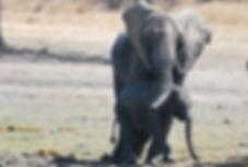 Malawian Tour - Eléphants