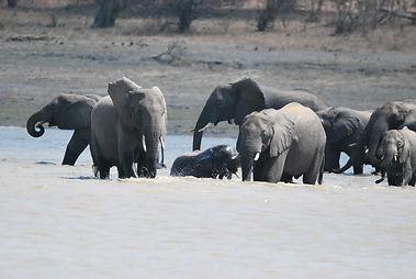 Malawian Tour - Eléphants à Vwaza Marsh