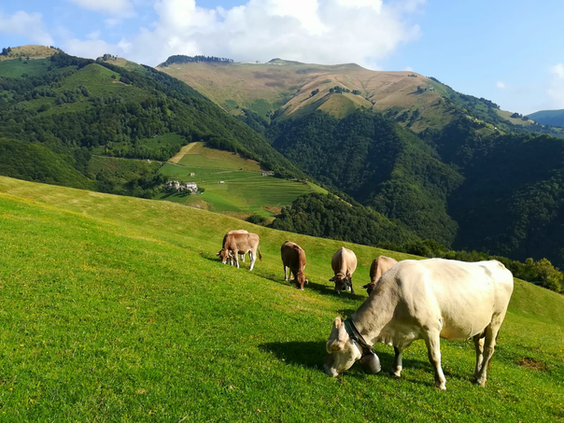 I pascoli di Pianspessa ed il monte Generoso.