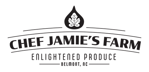JTC_CJF_logos_WORDMARK.png