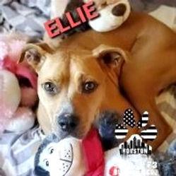 Ellie%20Snuggles_edited.jpg