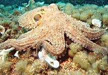 Octopus2_edited.jpg