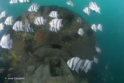 Spade fish at The Hatteras
