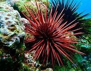 sea urchin - Copy.jpg