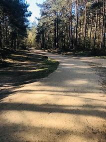 pathway 4.jpg