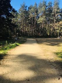 pathway 3.jpg