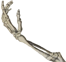 skeleton hand reach angled.png