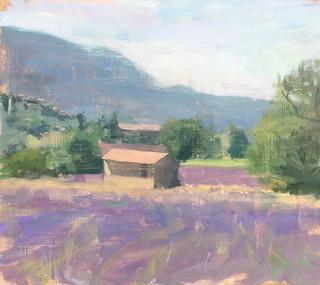 Lavender fields n 1