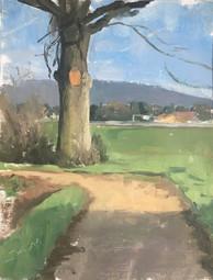 A tree in Bourg-en-bress