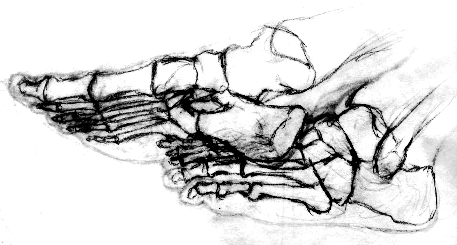 Bones of Feet