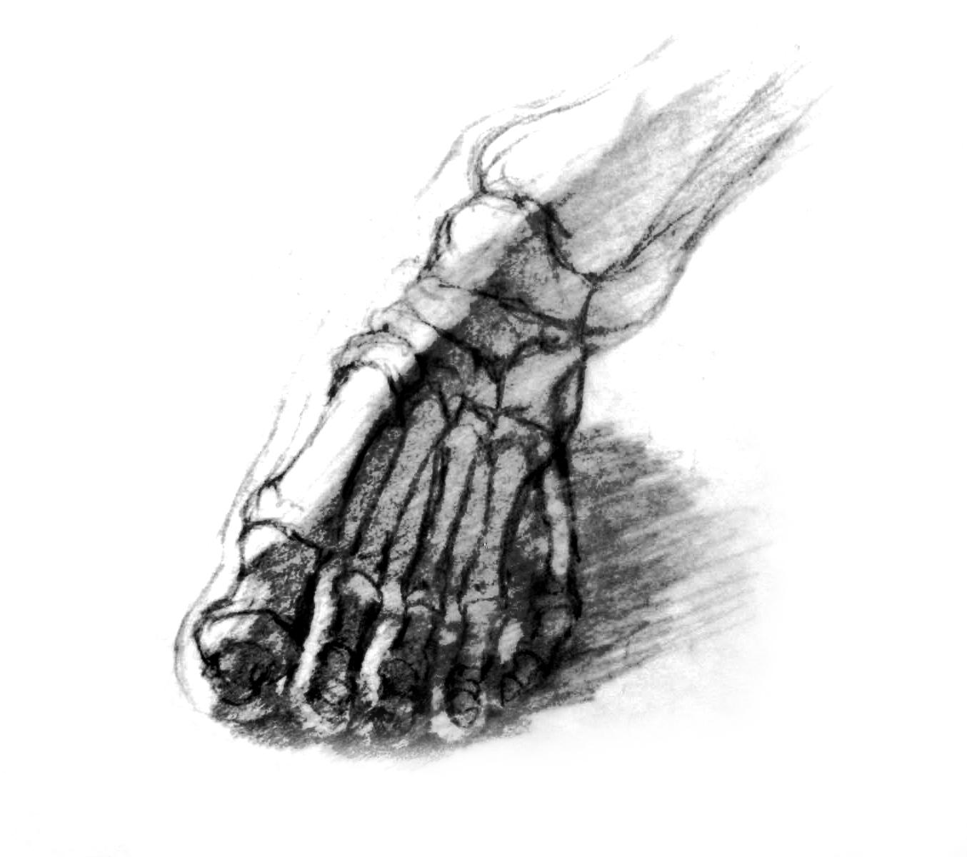 Bones of Feet 2