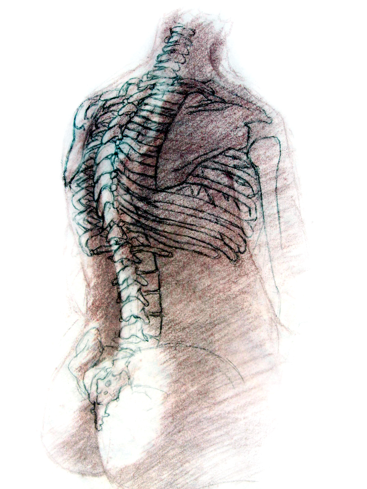 Spine Structure, Seated
