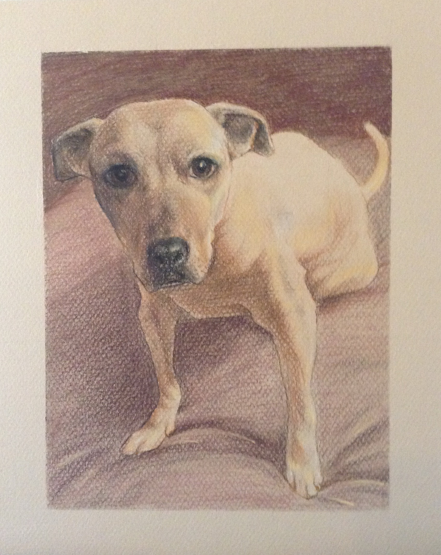 Portrait of a Pet