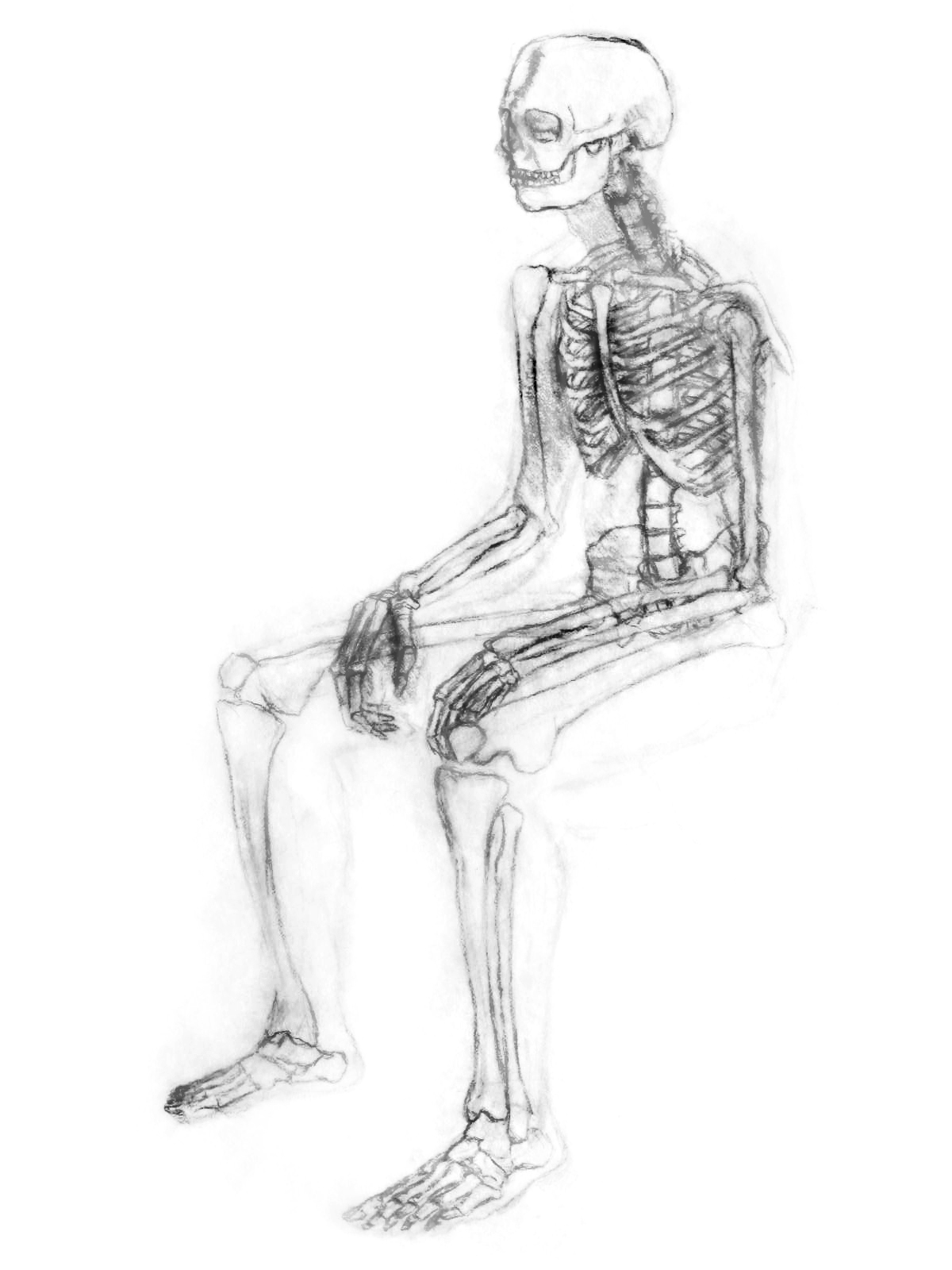 Bones in Sitting Position