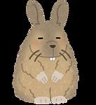 animal_viscacha.png