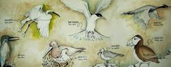 Les oiseaux de nos côtes bretonnes