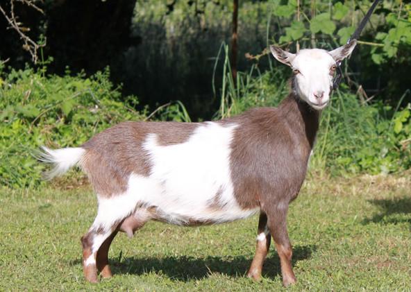 Franke Farm B Vanellope VS