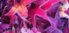Herfstbladeren%25202%2520kopie_edited_edited.jpg