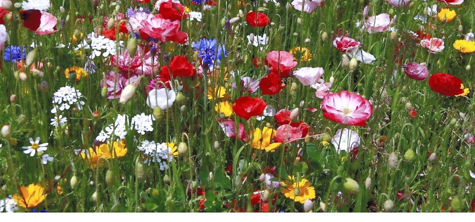 Bloemenweide kopie_edited.jpg