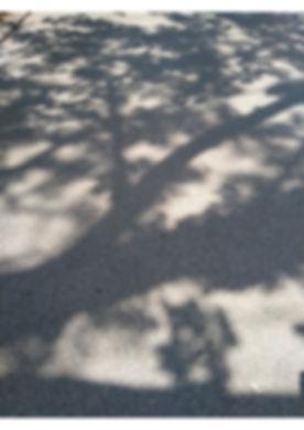 Schaduw boom 1 kopie.jpg