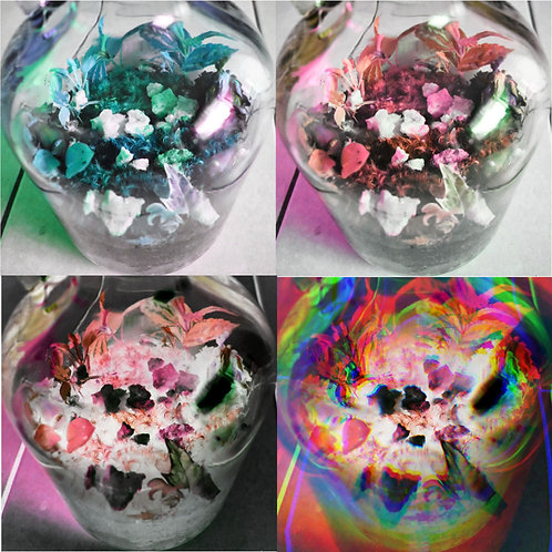 CECA Collab: In a Glass World Print