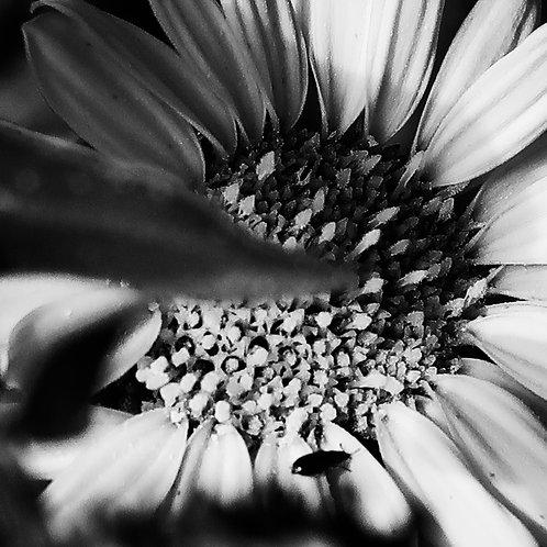 Taku Johnson: Sunflower Print