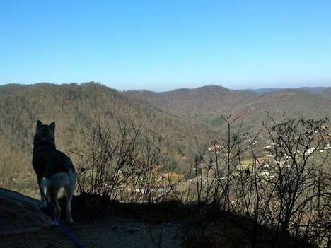 Tips & Tricks for Hiking with Your Dog