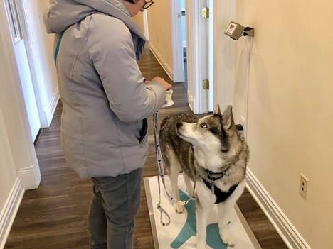 Choosing a Vet for Your Dog