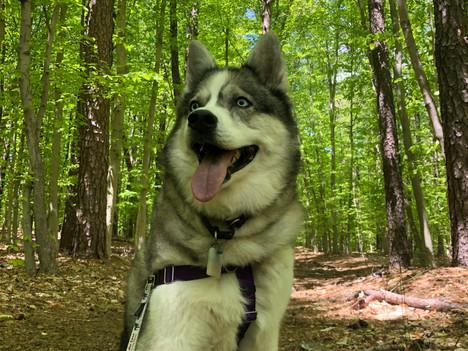 Hike New Jersey - Manasquan Trail
