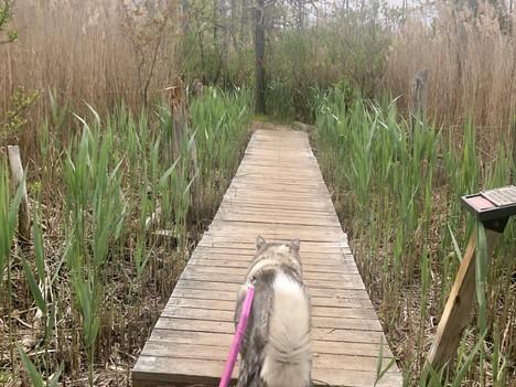 Best Dog Walking Gear - Top 8 List