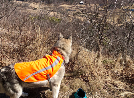 """Introducing """"Hike New Jersey"""" - Rattlesnake Swamp Trail"""