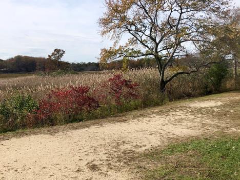Hike NJ - Cheesequake State Park