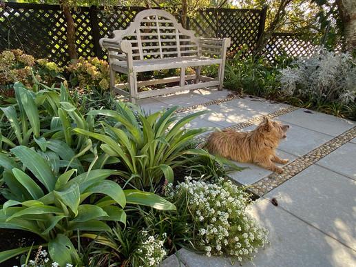 Brookyn back garden