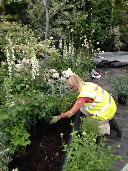 Chris Prebble planting the white garden