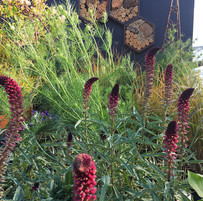 Planting design NZFlower Show