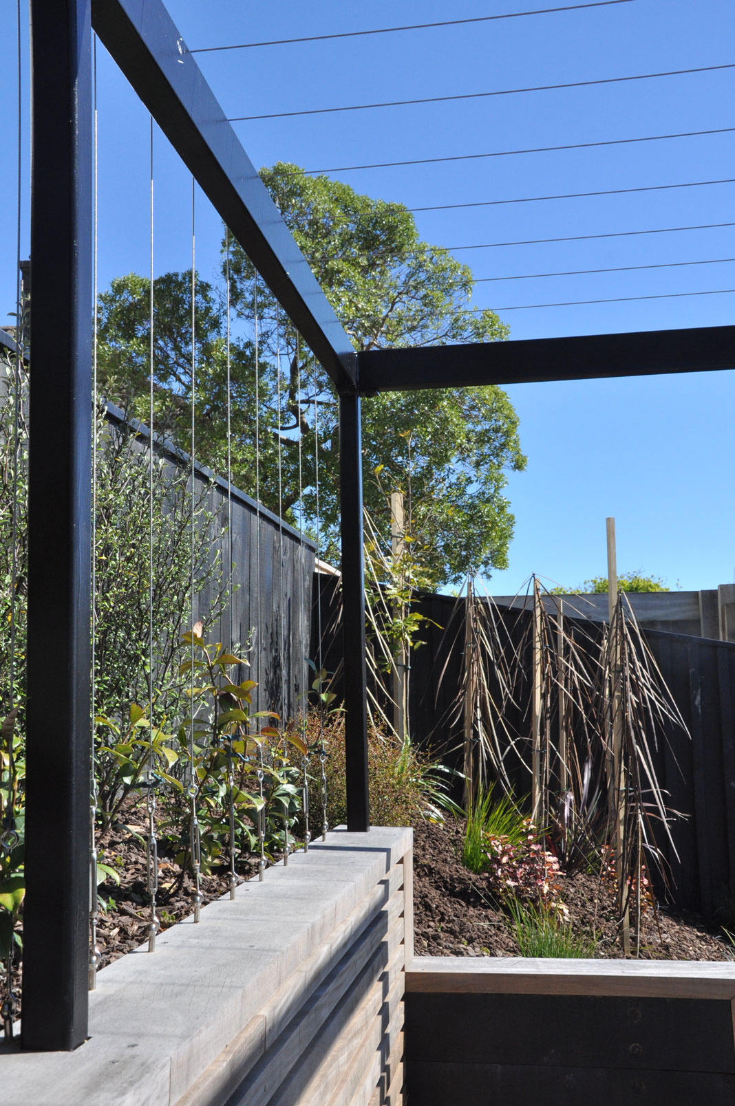 Pergola with vertical wires climbers