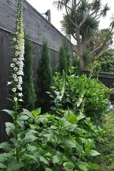 Back garden planting design