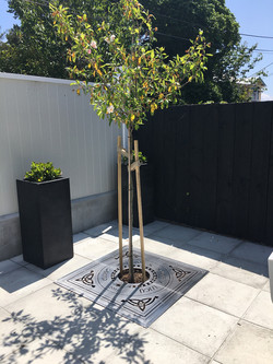 Tree grate designed by Mosaicdesign
