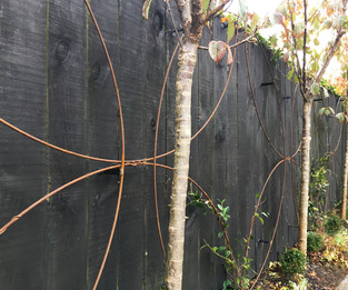 Circular steel design on fence for training jasmine