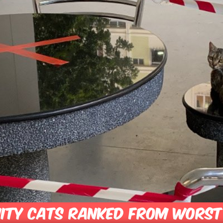 All The Community Cats I've Met From Worst To Best