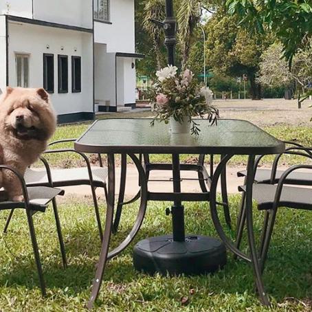 Top Three Pet Friendly Restaurants in Singapore