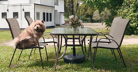 Top Three Pet Friendly Restaurants in Singapore