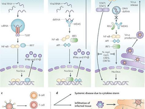 Coronaviruses post-SARS: update on replication and pathogenesis