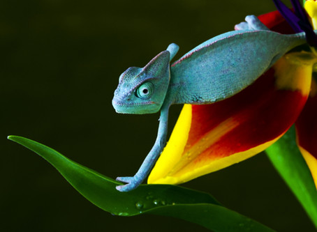 3 ways to know if you've got Chameleon Syndrome: Identity Crisis for the identity expert
