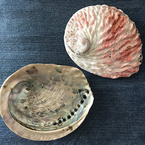 Abalone Shell | Includes shipping