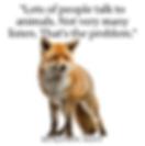 Fox image.png