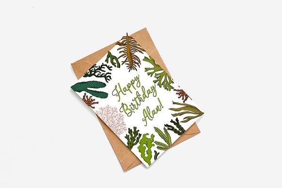 Personalised 'Happy Birthday' Card - Seaweed