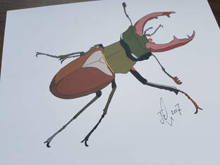 Stag Beetle Commission 2