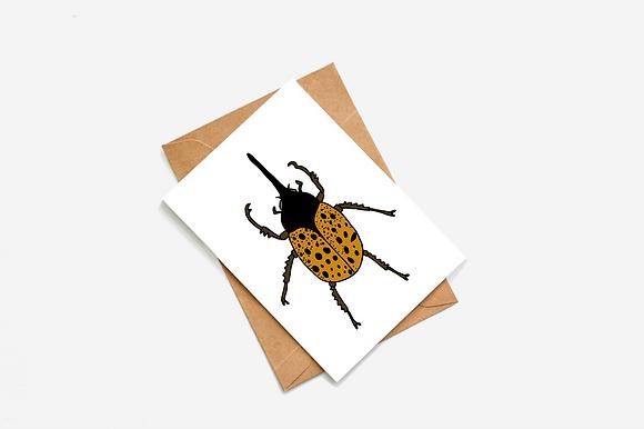 Beetle - Long Nose lllustration card