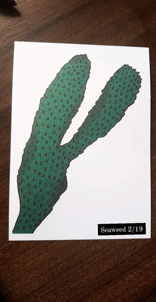 Seaweed II